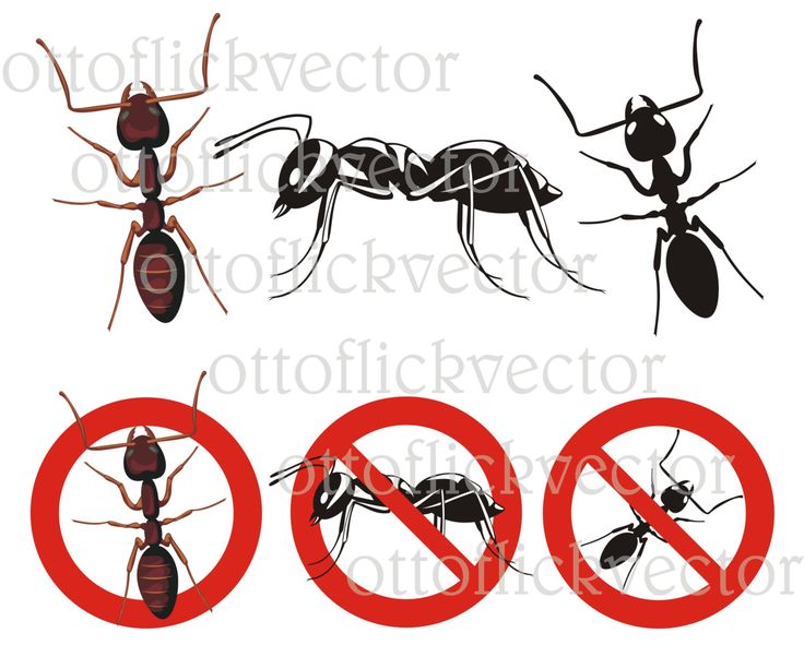 ANT VECTOR CLIPART, home pest control, ants silhouettes, warning signs eps, ai, cdr, png, jpg, insect, insecticide by ottoflickvector on Etsy