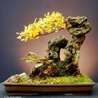 1800flowers japan
