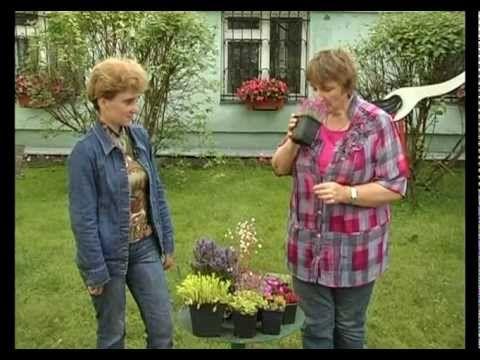 Сад и огород. Почвопокровные растения. - YouTube