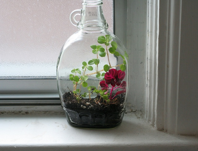 In A Maple Syrup Jar Art And Flora Pinterest Beauty