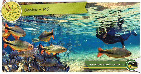 Conheça Bonito, cachoeiras e os rios incrivelmente transparentes e repletos de peixes coloridos ganharam fama e infraestrutura turística, tornando a região uma espécie de Disney ecológica.
