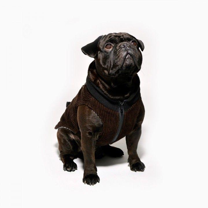 www.chezvalde.com Jumpin Jaxx - Pets favourite