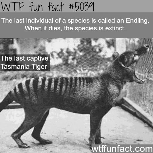 The 170 best Favorite extinct Animals  images on Pinterest     Endling   WTF fun facts