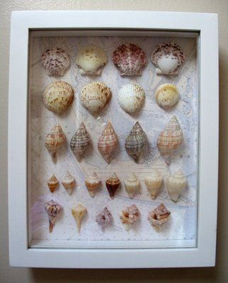 Best 25 Seashell Shadow Boxes Ideas On Pinterest
