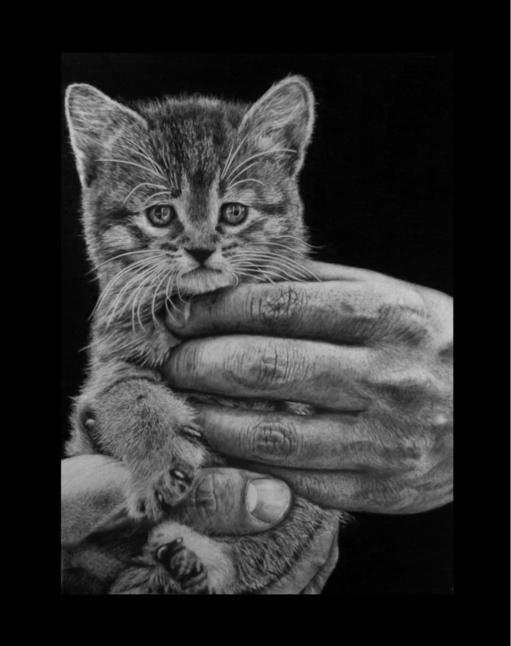 Big paws little pass. Keith More hyperrealistic pencil drawing A3 size.