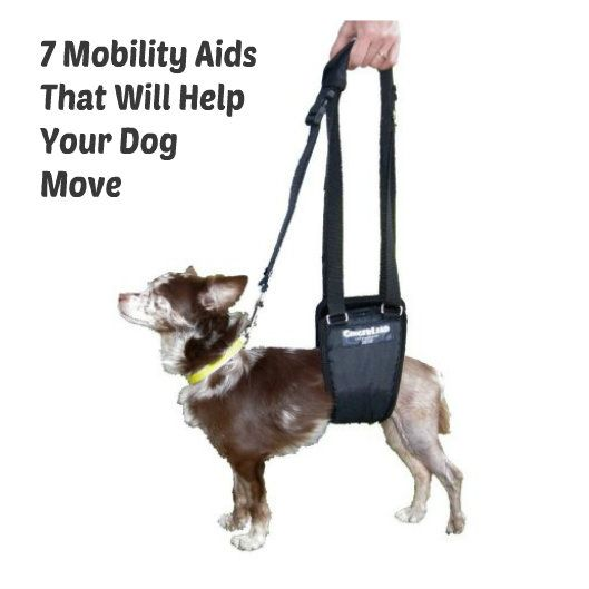 Does your dog need help walking or moving around?   Whether your dog has suffered injuries requiring leg amputation, an illness or arthritis has weakened his legs so that his movements are restricted, you may want to look into some of the mobility aids available to help your dog stand up, walk, and accomplish tasks that improve his lifestyle.  From dog wheelchairs to simple cloth binders and floor gripping boots, these 7 mobility aids should be able to help your dog enjoy life more fully…