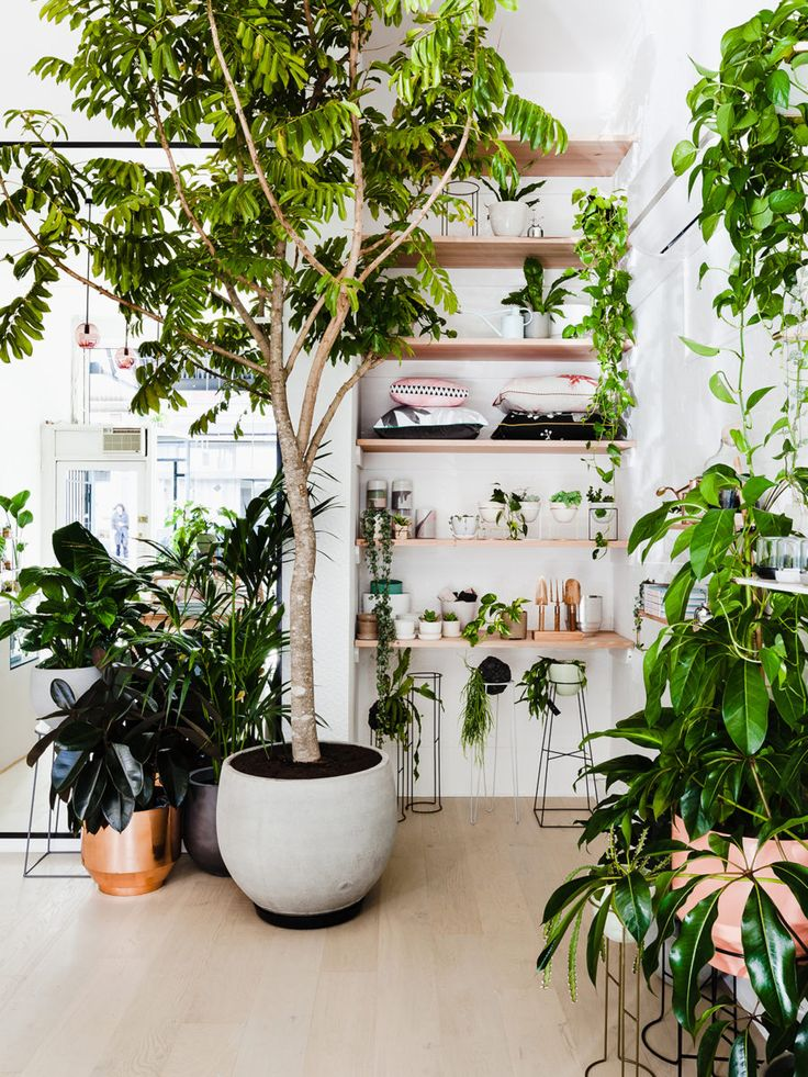 Most Popular Interior Design Blogs 177 best interior planting images on pinterest | architecture