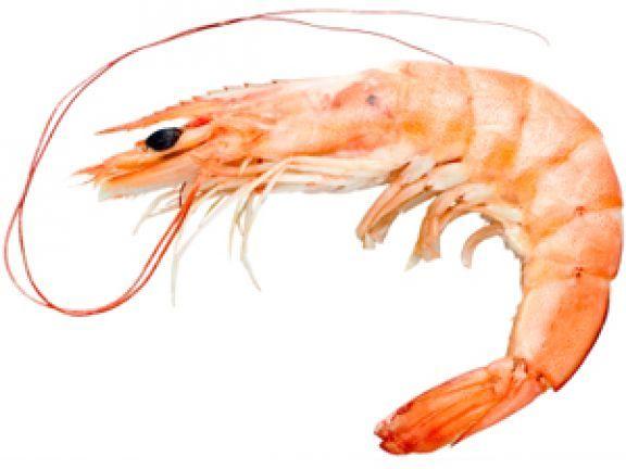 Warenkunde: Krebstiere - Die wichtigsten Fakten erfahren Sie auf EAT SMARTER.