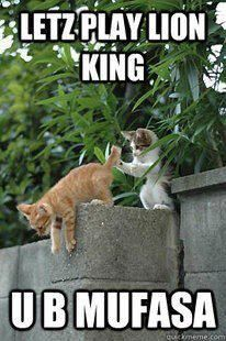 I normally strongly dislike cat memes... but this one is actually quite hilarious!