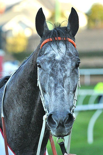 Chautauqua confirmed for Newmarket : Australia Horse Breeding and Racing news updated daily, www.thoroughbrednews.com.au