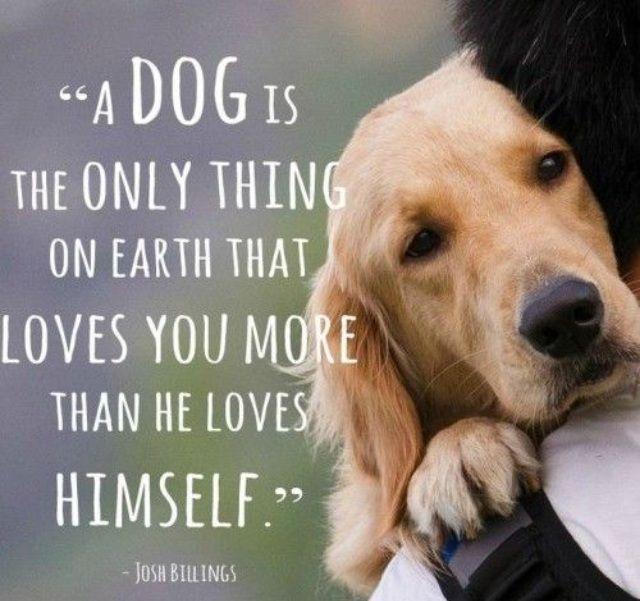 labrador dog quotes