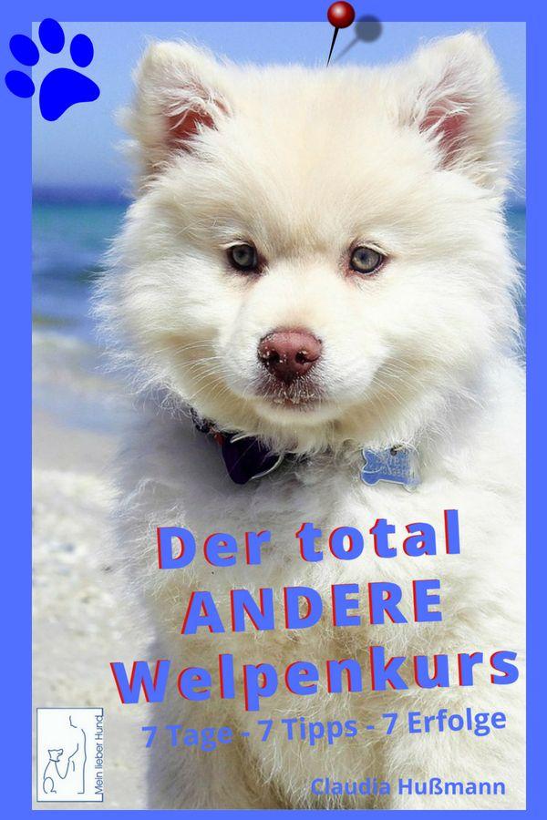Hast Du Noch Probleme Mit Deinem Welpen Oder Bist Du Schon Entspannt Mit Bildern Welpen Hunde Erziehen Hundeverhalten