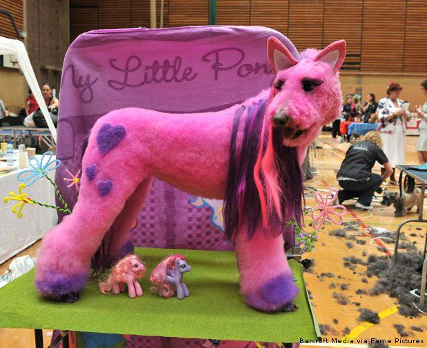 My little pony poodle