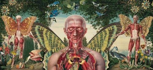 Anatomical Art of Juan Gatti