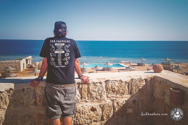 Unsere +TOP5+ der Hotels für Taucher & die besten Hausriffe in Ägypten, für Deinen nächsten Tauchurlaub rund um Marsa Alam am Roten Meer...