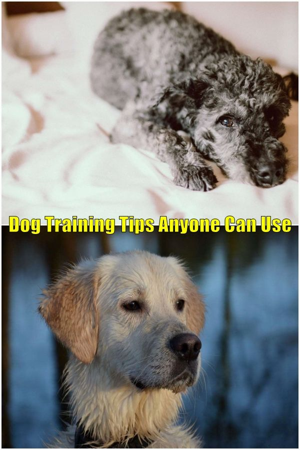 Learn This On Training A Dog In 2020 Dogs Train Learning