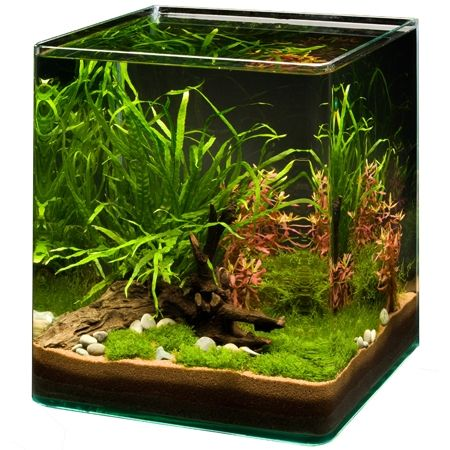 Großartig 111 best Cube Aquascape Ideas images on Pinterest | Aquascaping  SO48