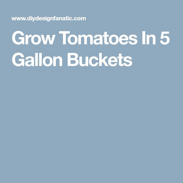 Grow Tomatoes In 5 Gallon Buckets Growing Tomatoes 5 640 x 480