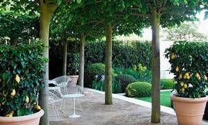 Klassisk italiensk havedesign i en moderne fortolkning: Terrasse med lindetræer som svalende grønt tag. Stauder og flade, klippede puder af buksbom. Store krukker med citronbuske skaber middelhavsstemning.