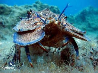 scuba-diving-kythera-10