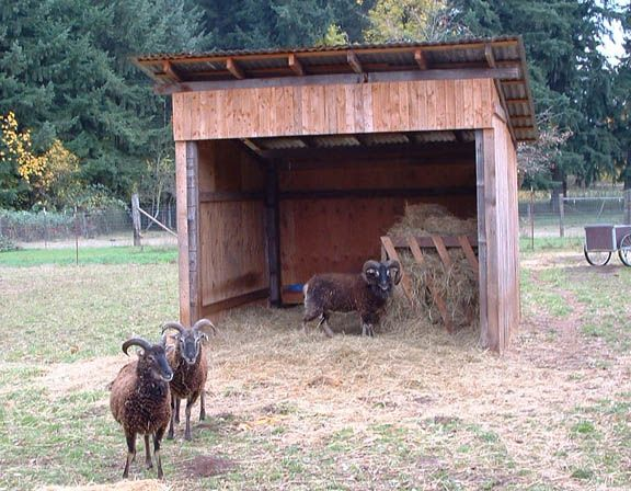 105 best images about field shelters on pinterest a shed for Farm shed ideas