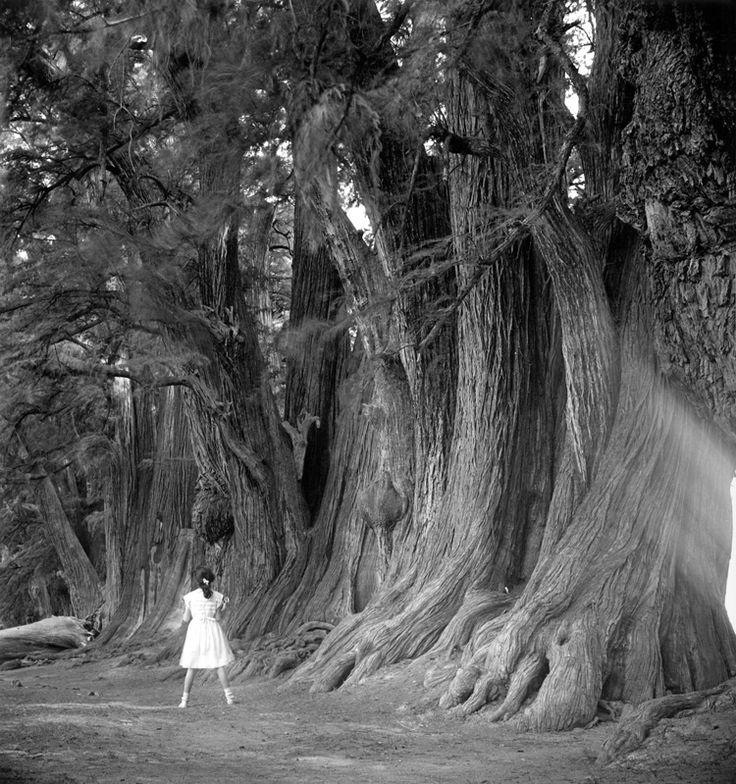 JUAN RULFO - Alice in ahuehuetes , 1950.