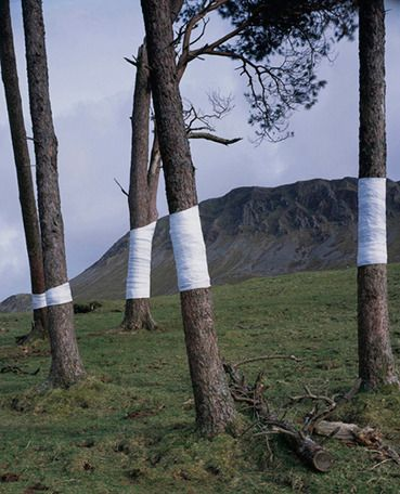 Zander Olsen Tree, Line 'This is an ongoing series of constructed photographs rooted in the forest. These works, carried out in Surrey, Hampshire and Wales,involve site specific interventions in the landscape, 'wrapping' trees with white material to construct a visual relationship between tree, not-tree and the line of horizon according to the camera's viewpoint.'