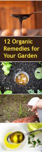12+Organic+DIY+Remedies+for+Your+Garden
