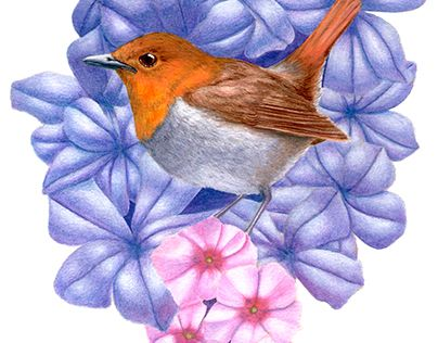 """Check out new work on my @Behance portfolio: """"Robin"""" http://be.net/gallery/45366941/Robin"""
