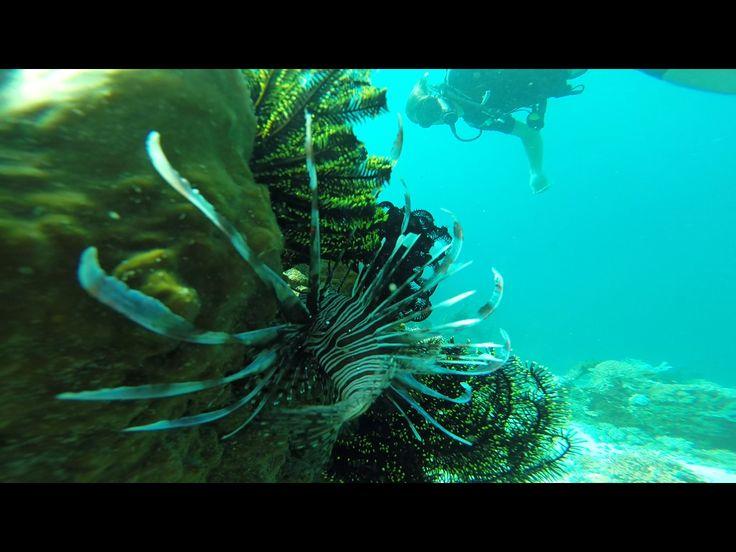 K41 Dive Spot