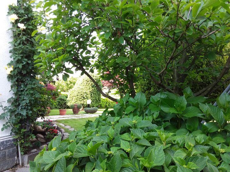Idee Per Il Giardino Di Casa : 222 best idee per il giardino di casa images on pinterest