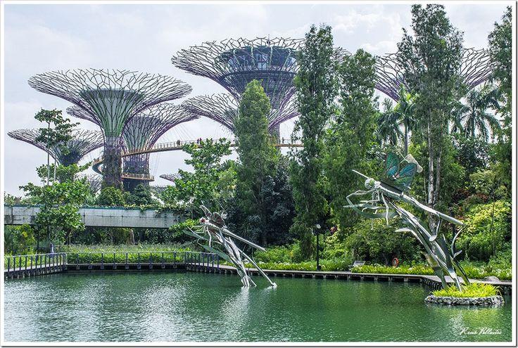 Supertree Grove & Skywalk, Singapore