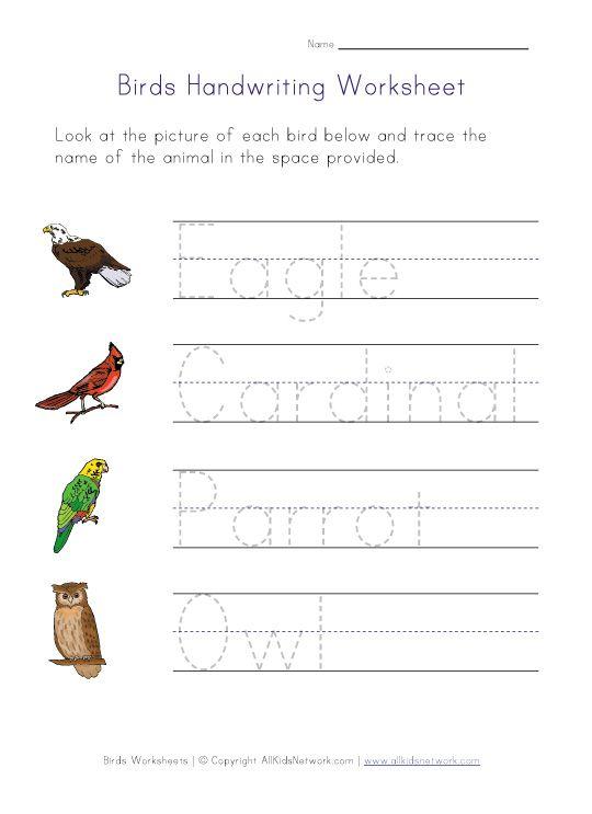 ... on pinterest worksheets bird : Free Bird Worksheets For Kindergarten