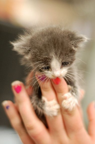 33 Utterly Adorable Photos Of Itty Bitty Foster;Kitties. Love what these people are doing !!!: