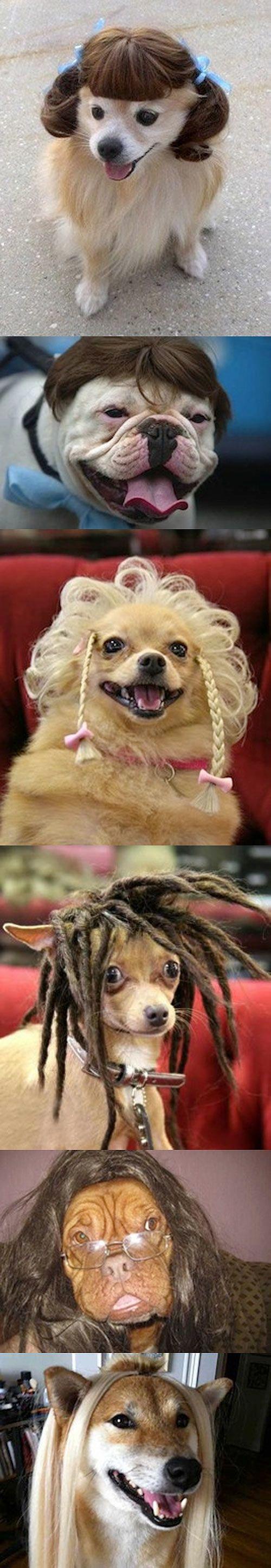 Perros con pelucas.