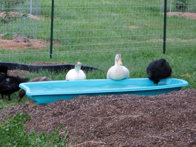 Sled duck pool diy animal plant shelters pinterest for Mississippi wind pool
