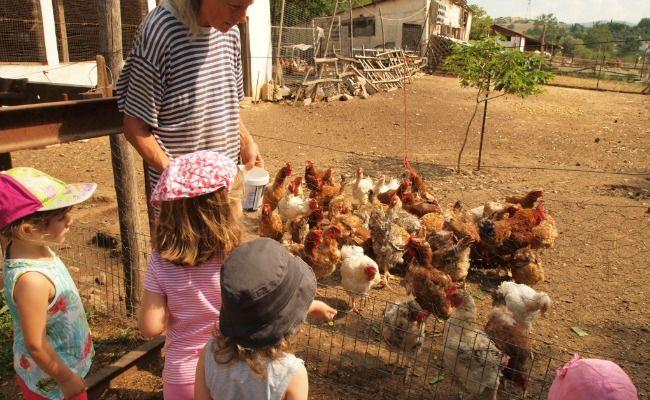 Αγρόκτημα Οικολογικής Γεωργίας