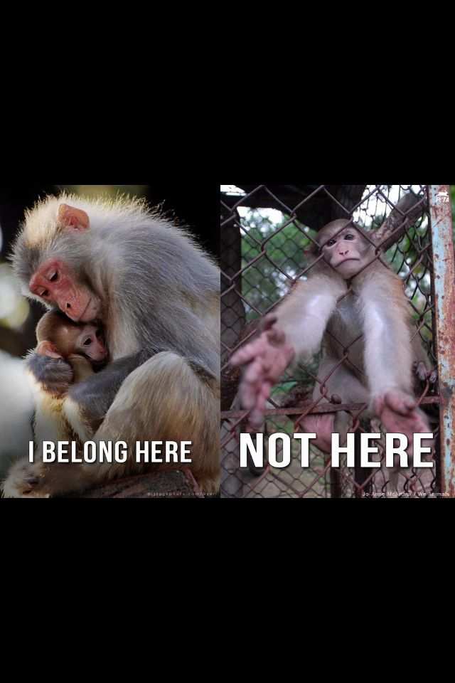14 best Boycott zoos images on Pinterest  Animal rights, The zoo and Zoos