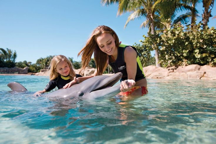 5 tips for making the most of a day at discover cove - orlando informer