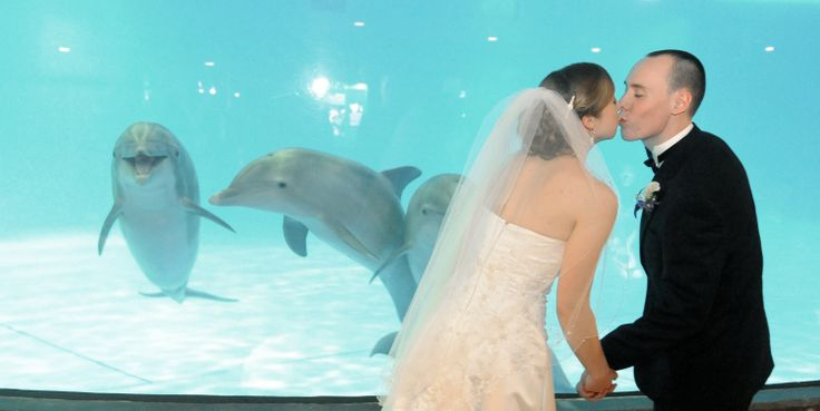 Have your wedding at the National Aquarium, and it's almost guaranteed to be cute. They've done events near the dolphin tank, and a few sea mammals have joined in the fun (from behind the glass, of course). - via @Baltimore Sun: Kim Hairston, Minarik Kiss, National Aquarium, Happy Atmosphere, Hairston Photographers, Devon Minarik, Caroline Trowbridg, Dolphins Exhibitions, Dolphins Swim