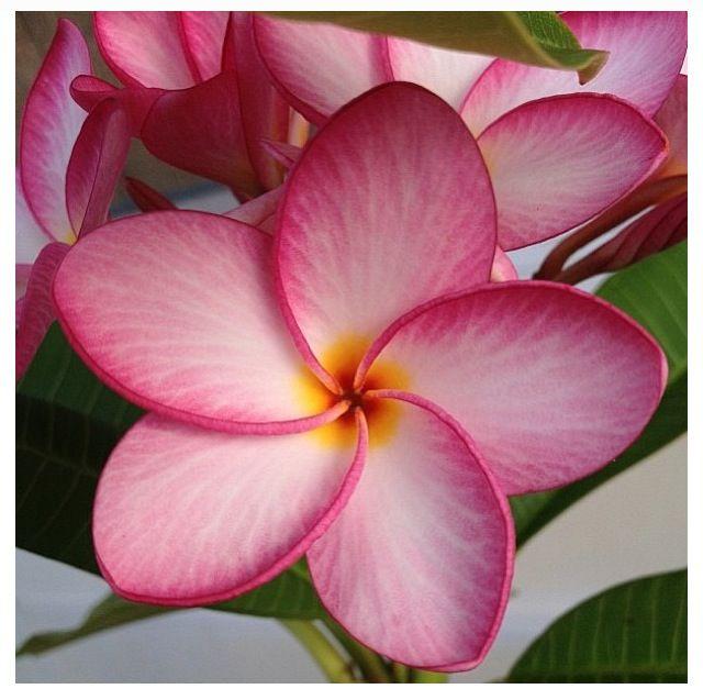 Charm Bracelet - Pink Plumerias by VIDA VIDA d6J5fRgpR