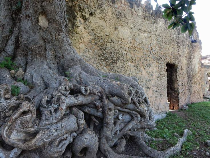 Tree roots cling to a 15th century wall on Kilwa Kisiwani Island, Tanzania. In 1981 the ruins of the powerful Swahili sultanate on the island were declared a UNESCO World Heritage Site.