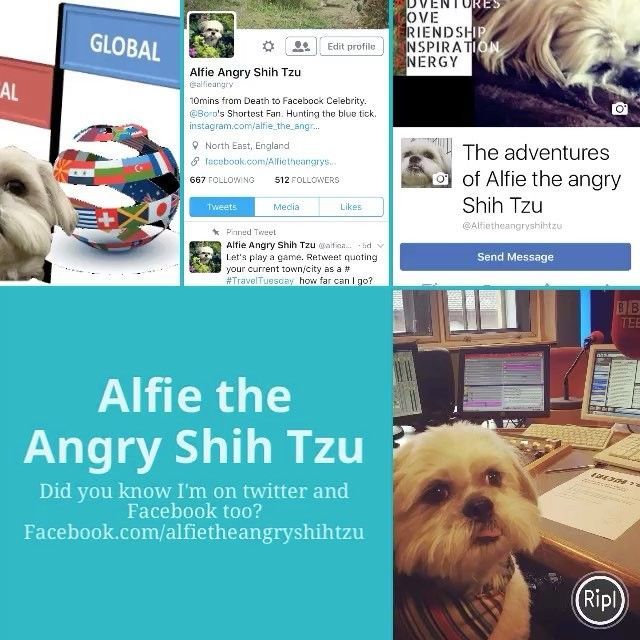 """11 Likes, 1 Comments - Alfie; A Rescued Dog Who Blogs (@alfie_the_angry_shih_tzu) on Instagram: """"#Follow me #alfietheangryshihtzu #MondayMotivation https://m.facebook.com/Alfietheangryshihtzu/…"""""""