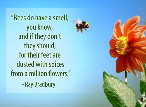 Bee Quotes: 19 Best Images About Quotes, Thoughts, & Sayings About