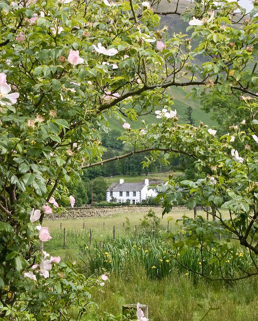 Rose cottage- Lake District - england. 'Twould be a dream to go to the Lake District in England. Maybe do a lil' wordsworth research..