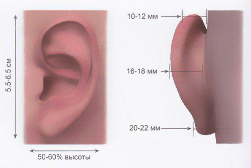 нормальное положение и размеры ушной раковины