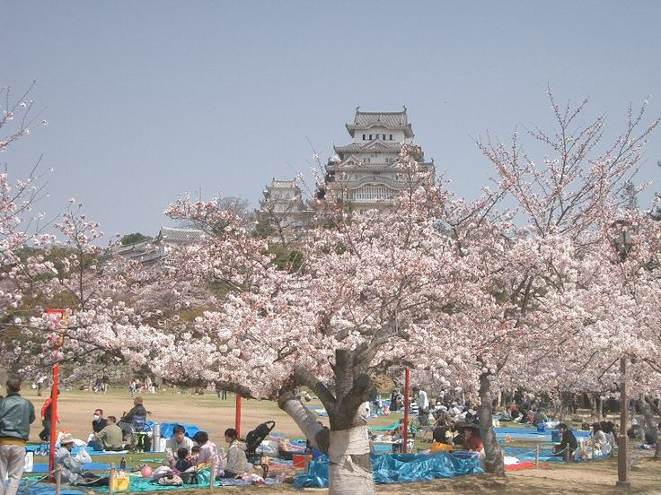Hanami in der Nähe der Burg Himeji, Japan _https://de.wikipedia.org/wiki/Hanami
