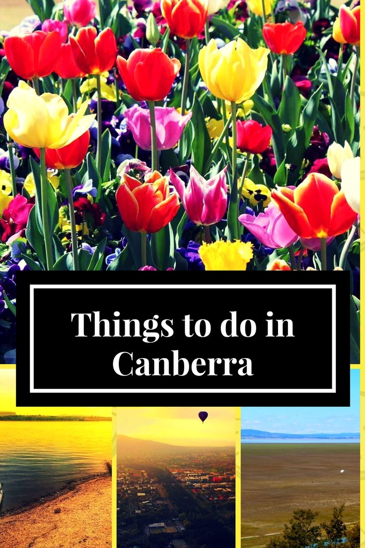 Top Things to do in Canberra, Canberra in 72 hours, Floriade in Canberra, Canberra in three days, Things to do in Canberra, Things to see in Canberra, Lonely Planet top 10 destinations for 2018 #Canberra #australia