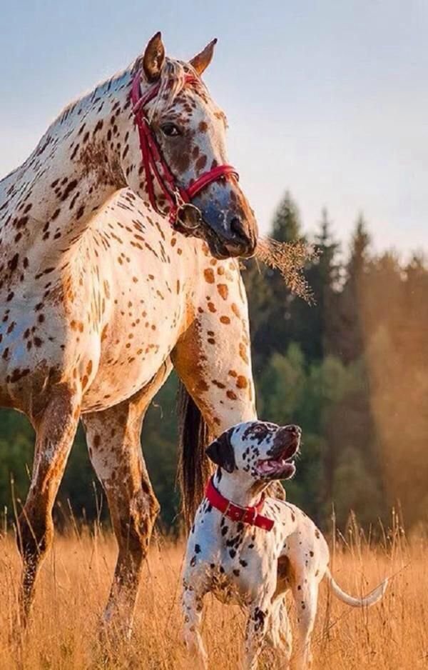 "Horse : ""  We're not related ~ Just Good Friends… ""  ❤️"
