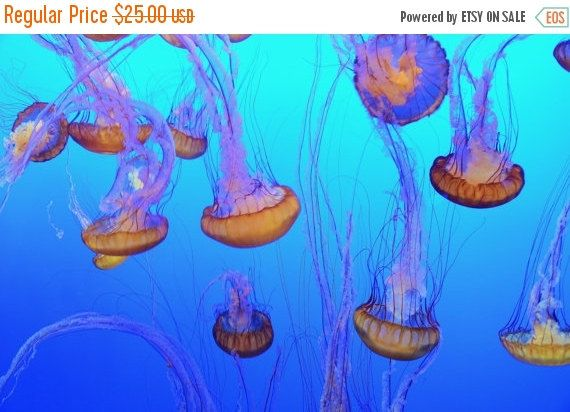 ON SALE Sea Nettle Jellyfish Color Photo by PhotosbyMarilyn